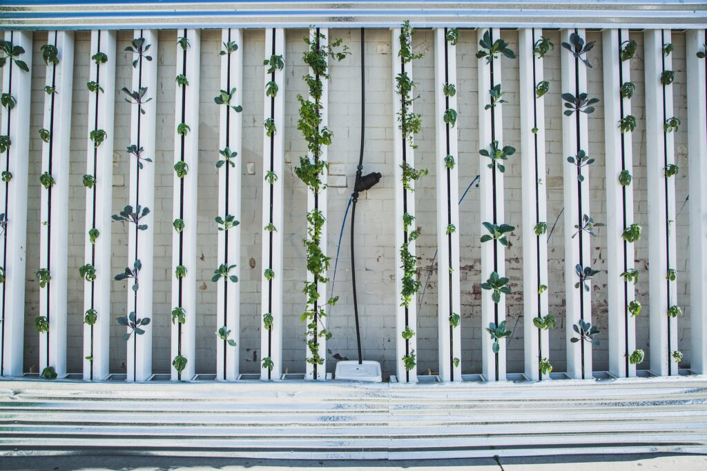 example of a hydroponics vertical growing wall.